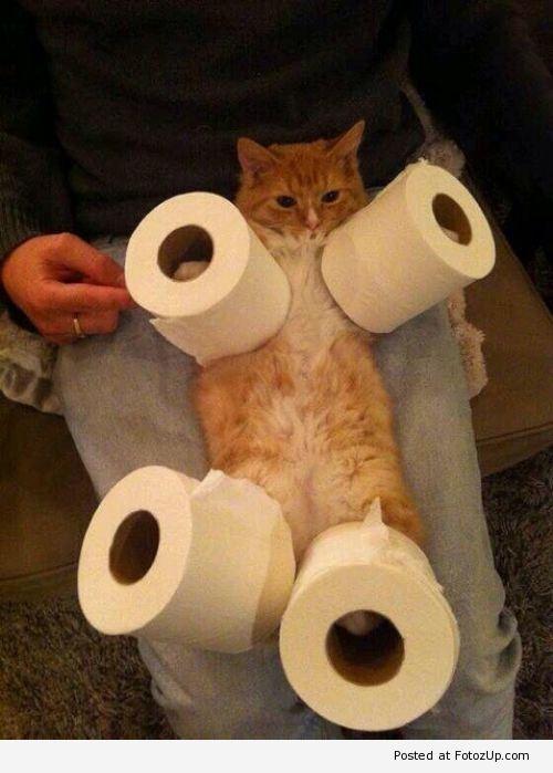 too #cute #funny #cat