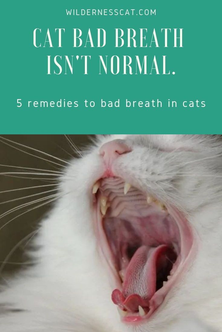 Cat Bad Breath Causes And Natural Remedies For Bad Breath In Cats Wildernesscat Cat Bad Breath Bad Breath Remedy Cat Breath
