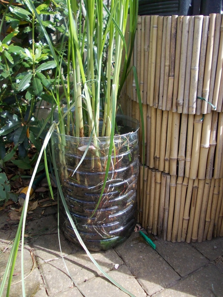 Have a water butt but not so nice to look at wrap bamboo for Bamboo water garden
