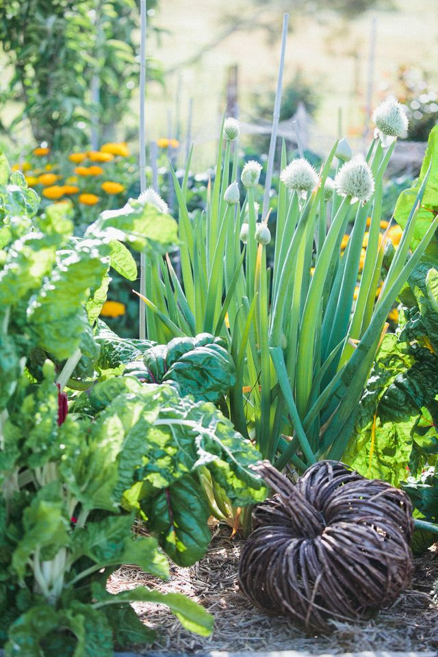 Mica Grange vegetable garden