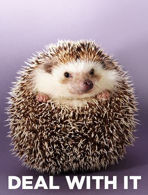 What Animal Were You Born To Be?  Hedgehog  You're intelligent, quick on your feet, and oh so lovable. But maybe people avoid getting too close to you sometimes because you're so sharp. Too sharp.