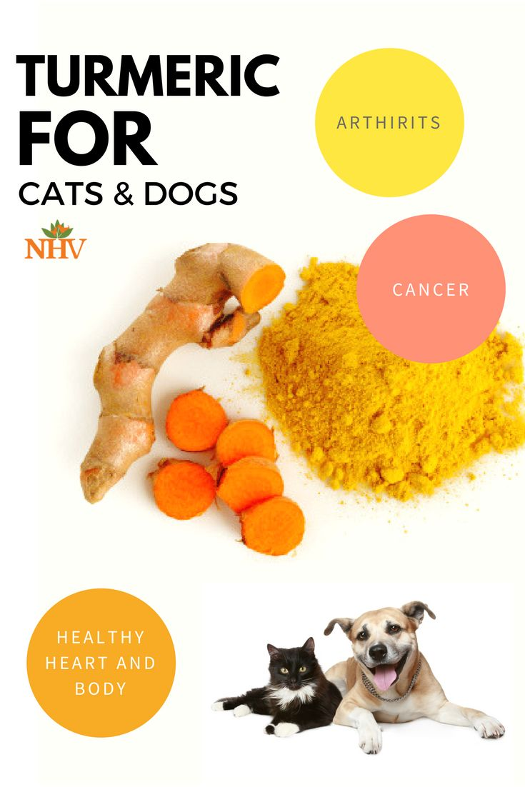 The oral bioavailability of Turmeric can be a problem, meaning that it is not absorbed well into a pet's body if given by mouth. NHV has liquid turmeric which can make it easy for pet parents. Read about its benefits for your dog or your cat here.