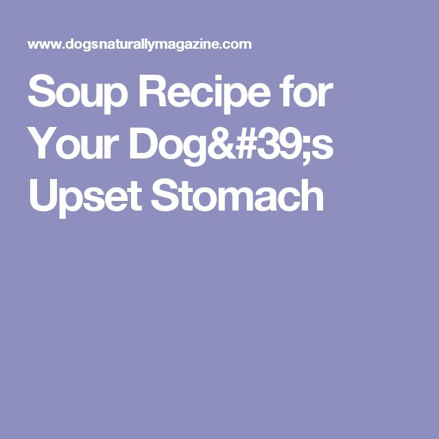 Soup Recipe for Your Dog's Upset Stomach