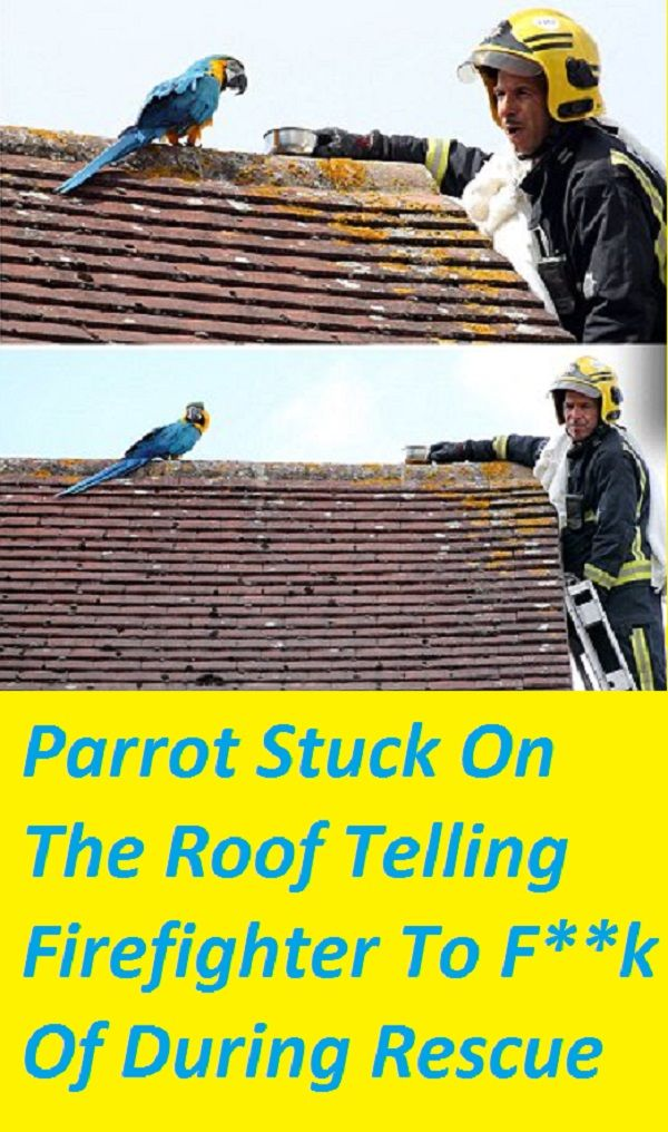 parrot#curse#roof#rescue | Cats   cats   cats | Parrot