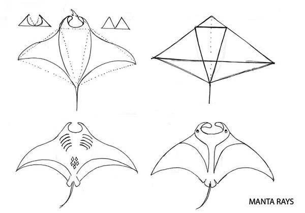 manta ray  drawing manta ray step by step coloring pages  drawing manta ray step by step