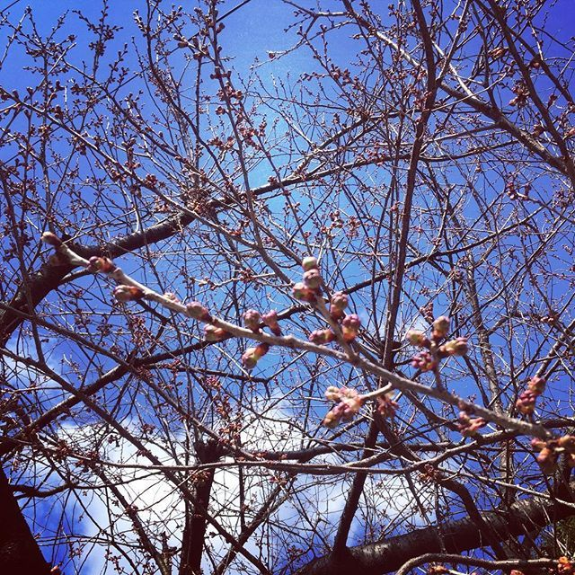 【ma_min2017】さんのInstagramをピンしています。 《Nice and sunny day for Ehime marathon race! Spring has almost come🌸 #愛媛マラソン #応援 #お散歩 #桜 #春待ち #ehimemarathon #marathon #walking #cherryblossoms #spring #waitingforspring》