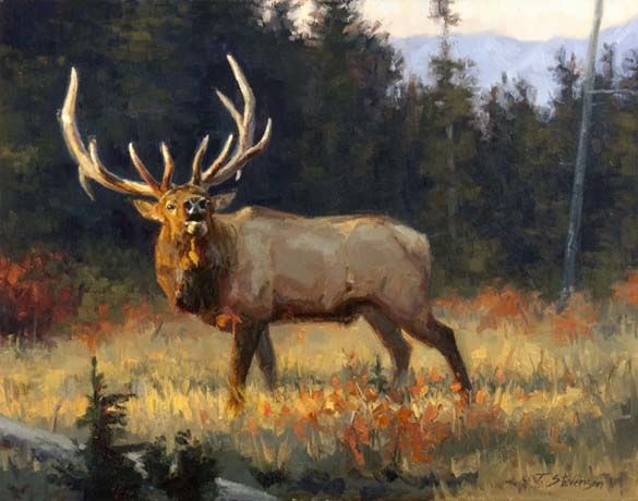 90 Best Elk Drawings Images On Pinterest
