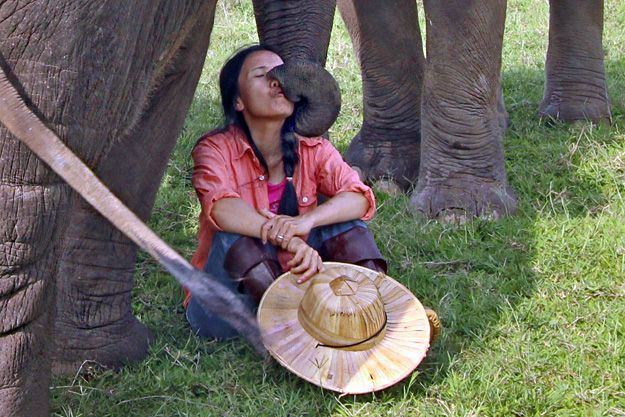 """One of the rescue elephants plants a kiss on the face of Founder """"Lek"""" Chailert"""