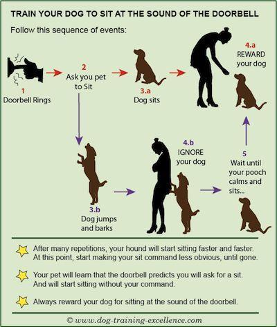 So bleibt der Hund beim Läuten der Türglocker ruhig und gelassen!   www.dog-training-excellence.com