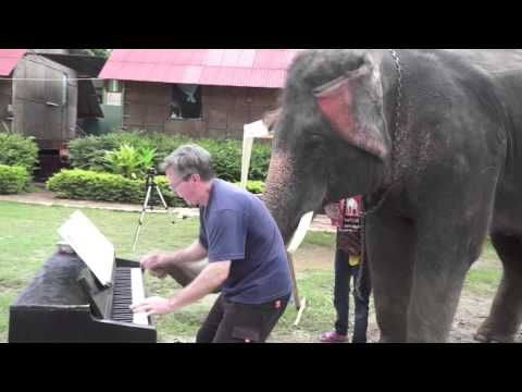 This Guy Played Piano For Some Elephants... But He Never Expected Them To Do This!