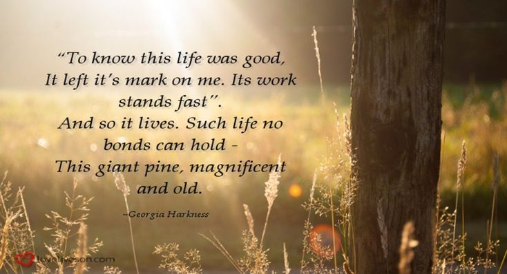 """Funeral Poem for Dad. """"To know this life was good, it left it's mark on me. Its work stands fast. And so it lives. Such life no bonds can hold - this giant pine, magnificent and old."""" #loveliveson"""