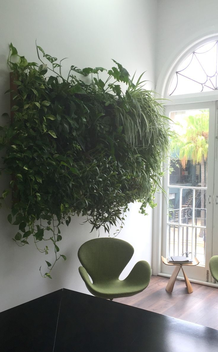 Atmosphy Green Wall www.atmosphy.com.au #green wall #greenwalls #indoor plants #interior design