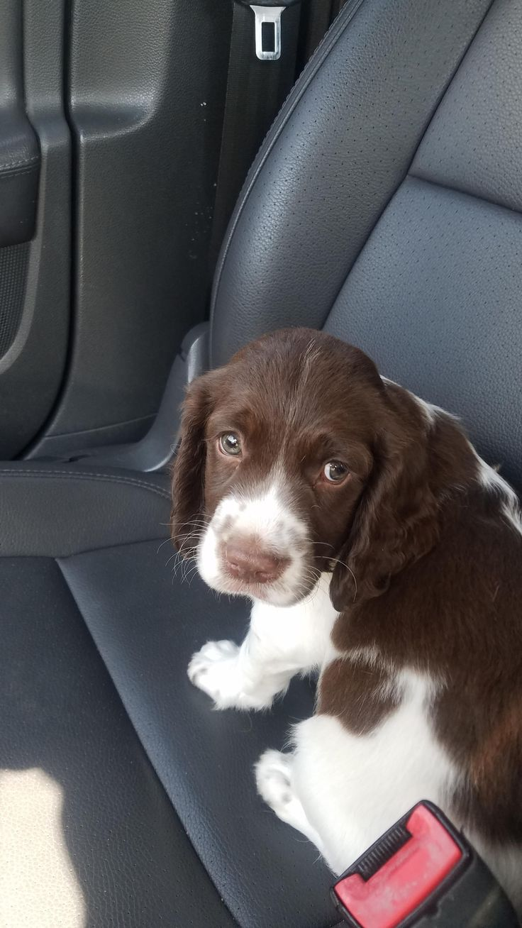 Buckley newest member of the family is sad to leave Petsmart. http://ift.tt/2wYUmqV