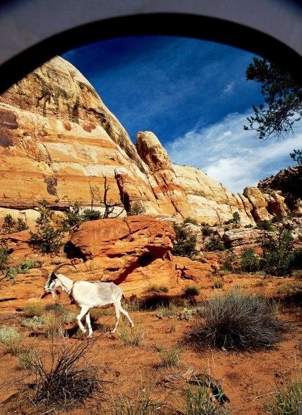 Escalante Canyon Goatpacking Camp, Escalante Canyon, Utah