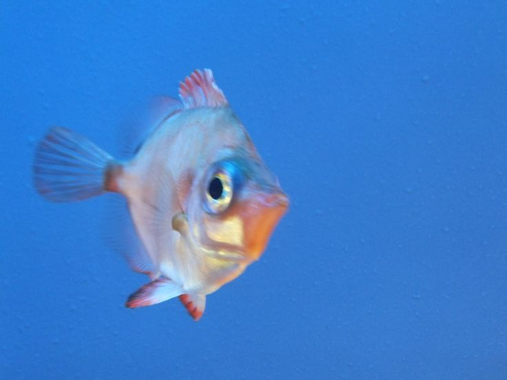 fishy (by Pingwynne)