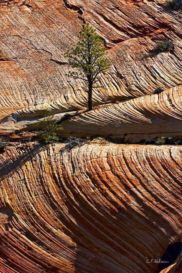 #tree #landscape #nature