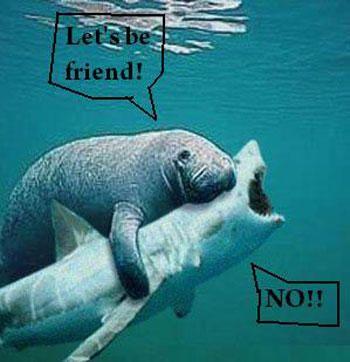 Funny Sea Creatures On Being Friends #sharkweek Giggles  Grins Pediatric Dentistry | #Southlake | #TX | www.gigglesandgrins.org