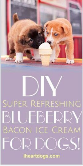 DIY Super Refreshing Blueberry Bacon Ice Cream For Dogs