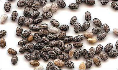 Bien que vous ayez récemment entendu parler d'elles, elles existent depuis des milliers d'années. En raison de leur valeur, les graines ont également été utilisées comme monnaie. Les graines de chia (Latin: Salvia hispanica) contiennent des acides gras oméga, des protéines, des antioxydants et des fibres. Elles ont unarôme doux denoix et parce qu'elles absorbent …
