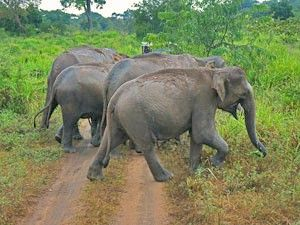 Discover the real Sri Lanka, with Rickshaw's authentic & meaningful Sri Lanka travel experiences. Engage with local communities, culture, nature & tradition.