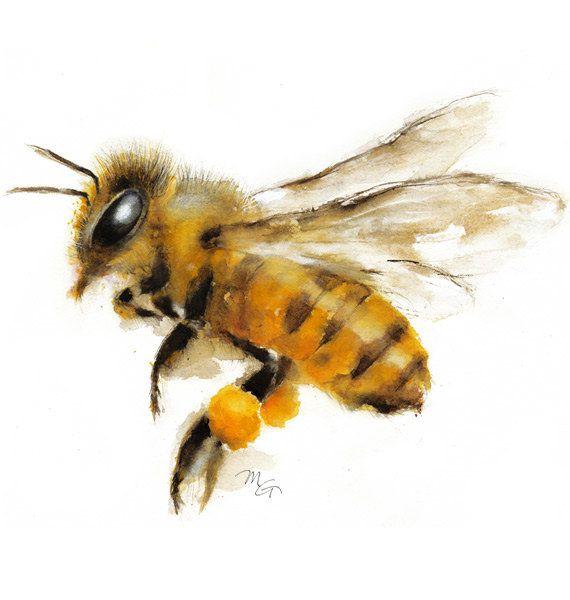 Acuarela de la abeja - la miel Art Print. Ilustración de la naturaleza. Miel de abeja, abeja de vuelo, arte encantadora abeja