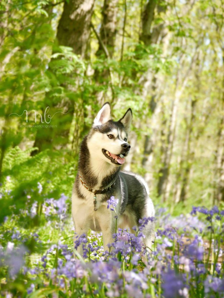 Fotografie Alkmaar. Porträtfotografie – Loveshoots – Schwangerschaftsaufnahmen – Freundinnenaufnahmen – Familienaufnahmen – Pferdefotografie – Hundefotografie -…