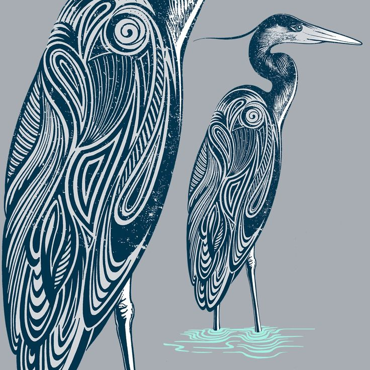 how to draw a heron flying