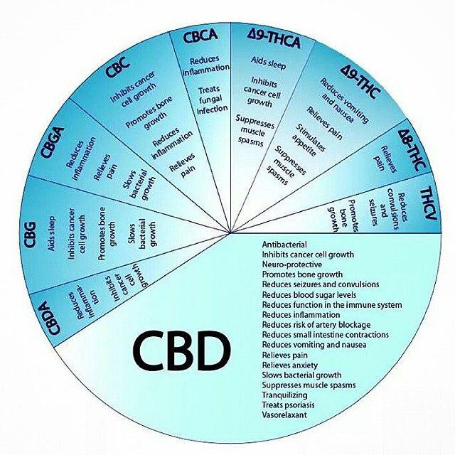 Il cannabidiolo (CBD) possiede attività analgesiche e antinfiammatorie mediate dall'inibizione della ciclossigenasi e lipossigenasi; non possiede attività psicoattiva. I tre grandi campi di indagine sulle proprietà terapeutiche del CBD si possono riassumere nelle sue potenzialità come sostanza anti convulsivante , nel trattamento del cancro e delle psicosi. Per quello che riguarda la ricerca sul cancro uno degli ultimi studi inContinue Reading