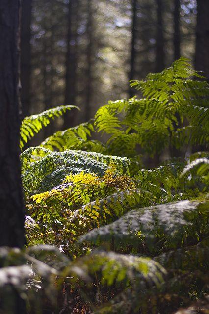 Forest ferns, via Flickr.