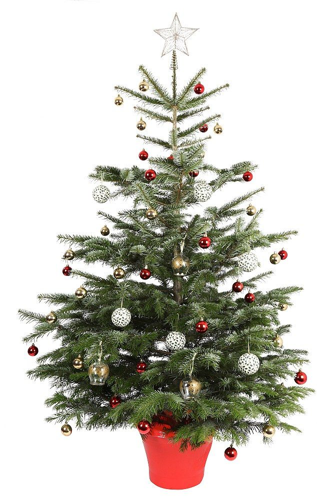 The £10 tree: JTF.com offer this 6ft real Christmas tree, which they describe as a 'minimal needle drop, glossy, green and full tree with a price that all families can afford' for £9.99
