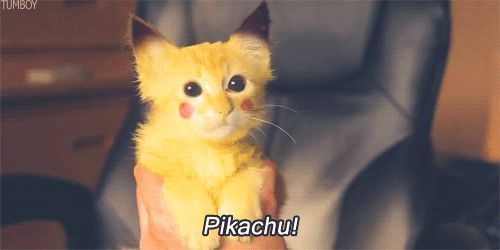 Cat Pikachu Cosplay (Pokemon)