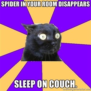 spider in your room disappears sleep on couch. | Anxiety Cat | Meme Generator