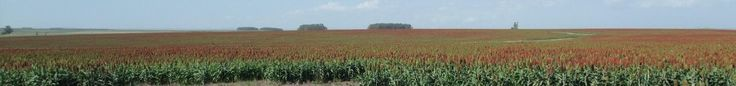 undeveloped raw land, farmland Interesting article on land in South America and more.  Investments for sale as inflation hedge Brazil, Argentina, Uruguay, Paraguay - news information opinion