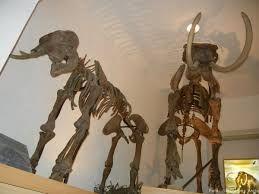zirc bakony természettudományos múzeum