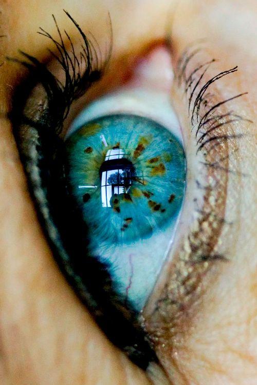 Amazing eyes. Amazing color                                                                                                                                                                                 More