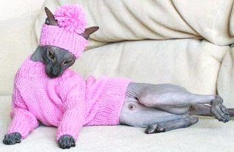 Cat Clothes - 33 Photo | Funny Cat | DomPict.com