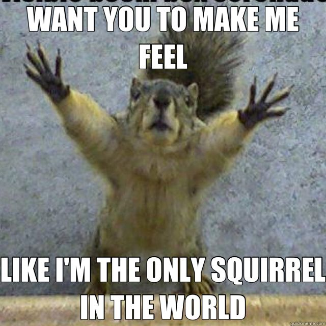 funny squirrel memes - Google Search