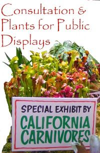 California Carnivores' online store, the LARGEST retail carnivorous plant nursery in the United States!