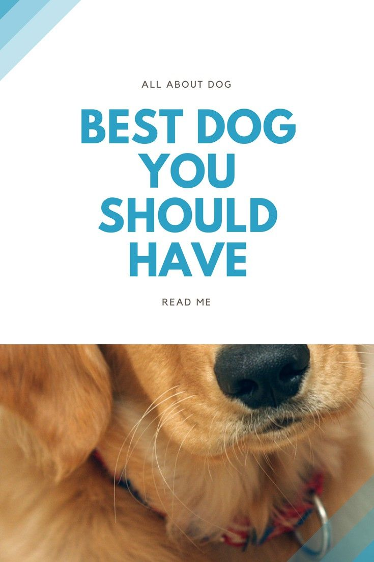 Dog Training Dog Training Tips That Are Proven To Work Dog