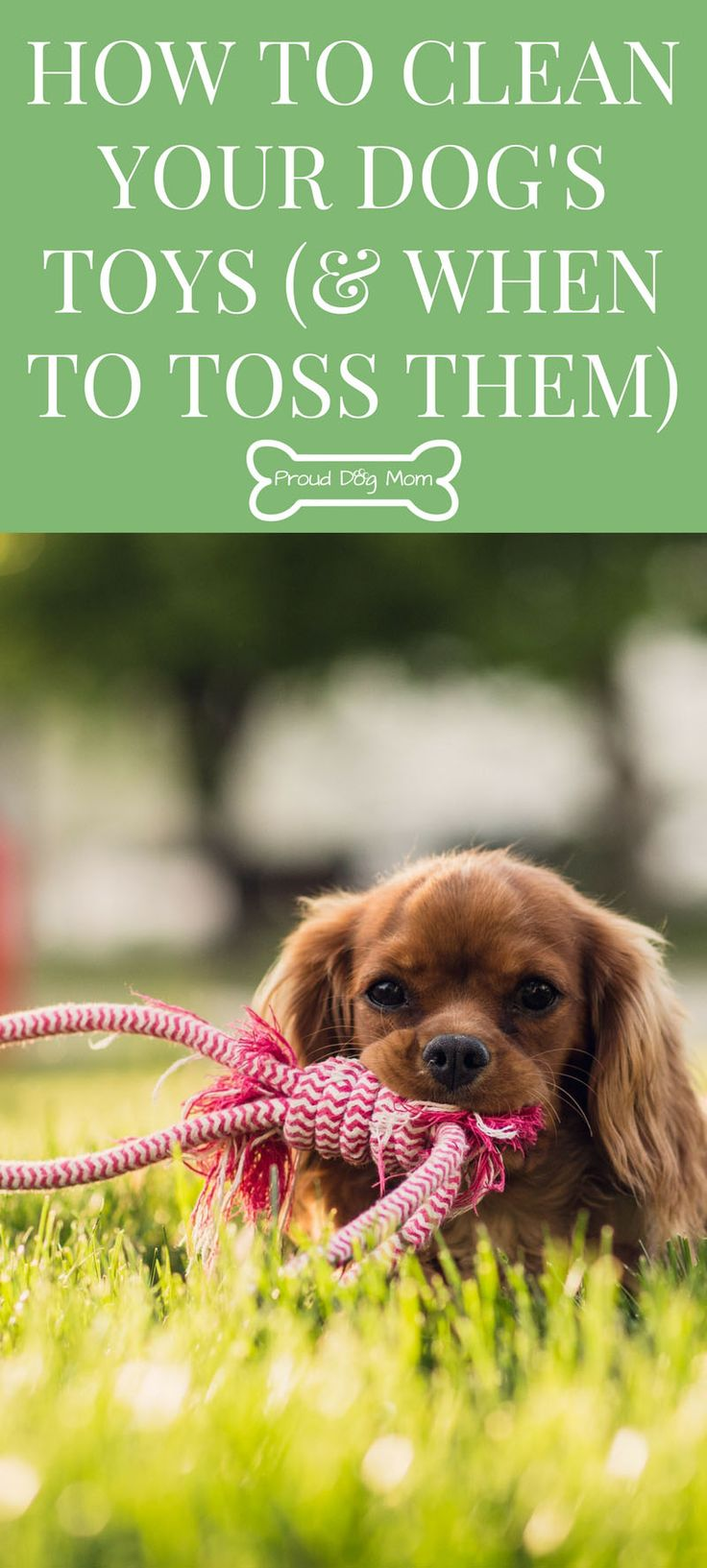 How To Properly Disinfect Toys : Best interactive dog toys ideas on pinterest