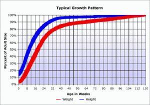 chiweenie puppy growth chart   chiweenies   Pinterest ...