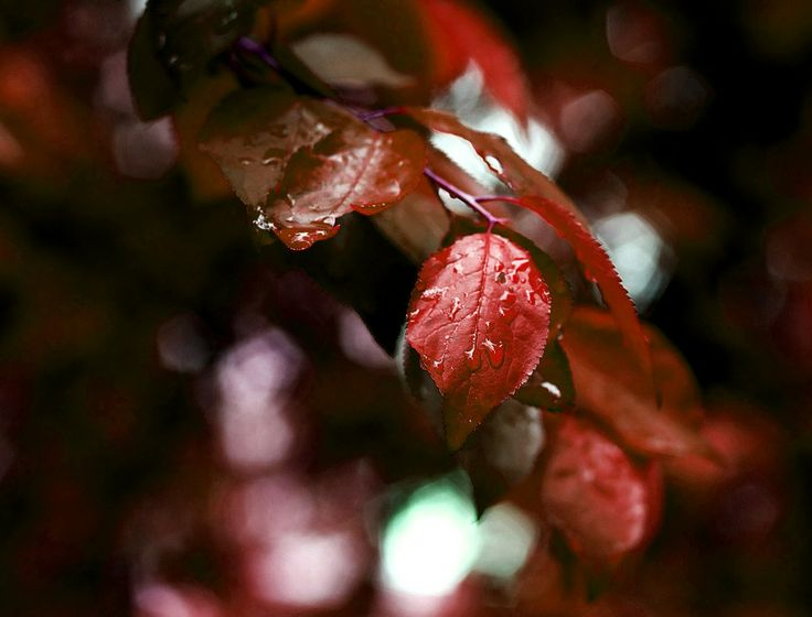 red drops by mircea mustatea on 500px