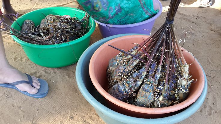 Freshly caught seafood right at your doorstep in Mozambique.