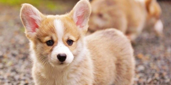 How To Name Your Pet Dog #PetNameIdeas  #CuteDogNames  #DogNames  #PuppyNames