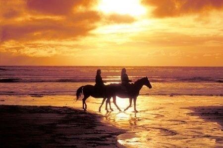 Lijkt het je leuk om een keer buiten paard te rijden, maar heb je geen ervaring? Puur Terschelling maakt ritten van twee uur met onervaren ruiters.