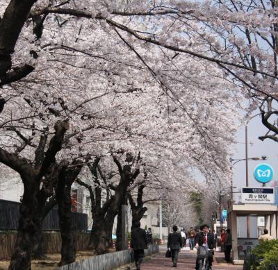 霞ヶ関のおすすめスポット ちょっとした散歩にぴったりの桜並木