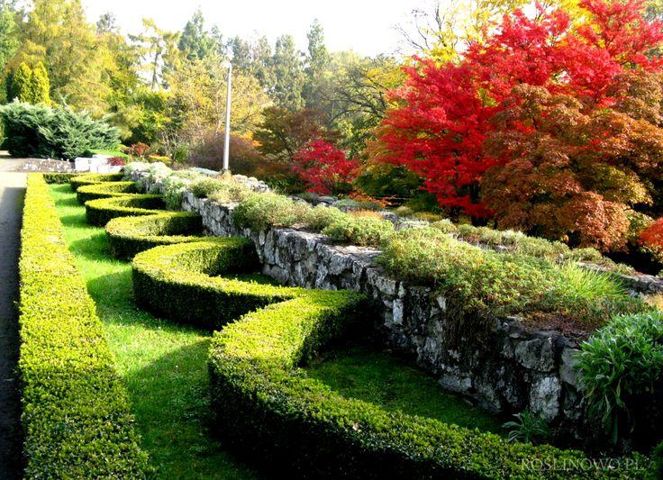 jesienne przebarwienia drzew II - discoloration autumn trees II