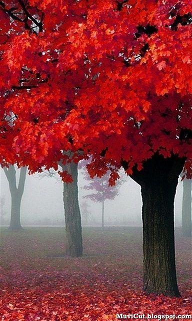 autumn in paris presented by north carolina interior designer kathryn greeley. So pretty!!