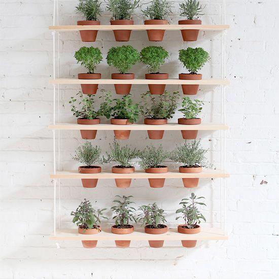Horta na parede em porta vasos