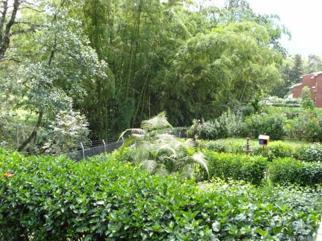 Green backyard in Envigado